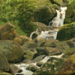 """Waterfall from El Yunque"" by ruben"