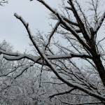"""""""Snowy Skies"""" by nativenerd"""