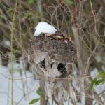 """Hornets Nest"" by nativenerd"