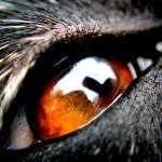 """""""Dog Eye"""" by nativenerd"""