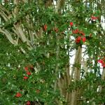 """""""December Berries"""" by TeeRee"""