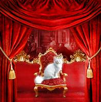 The Royal Cat