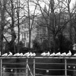 """""""Gulls."""" by Naumovka"""
