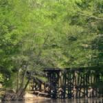 """""""Bayou Serenity"""" by BayouSerenityByJudyMcK"""