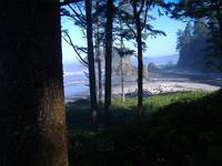 Ruby Beach with Tree