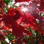 """Crimson Sun"" by KatesGrace"