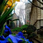 """Daffodils with Chrysler Building in Background"" by ShaneWells"