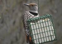 Flicker Eating