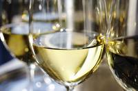 Close-up of a glass of white wine photograph