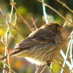 """Bird"" by Godisfirst"