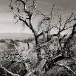 """Twigs"" by DanCarrillo"
