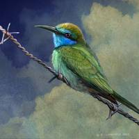 barriers - little green bee eater in israel