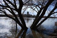 Regina Legislative through flooded trees I