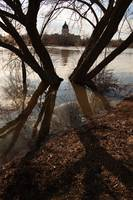 Regina Legislative through flooded trees II