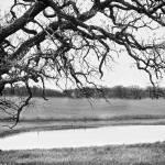 """BW Tree Pond-1"" by JacobMeudtPhotography"
