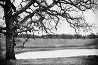BW Tree Pond-1