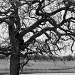 """BW Tree Pond-2"" by JacobMeudtPhotography"