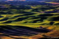 Evening Shadows on the Palouse