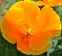 Lovely Orange Flower