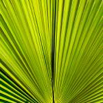 """Palm Frond"" by RobinCowles"