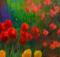 tulips of red and orange