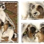 """Baby lemur photo collage"" by Funcards"