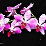 """""""Pink Flowers"""" by artstoreroom"""