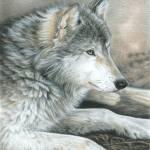 """Wolf ""Calm Wolf"""" by CarlaKurtArt"