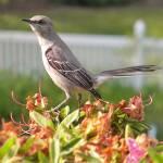 """Birds"" by Godisfirst"