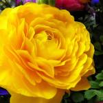 """Flowers & Foliage"" by Godisfirst"