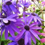 """floralandplants"" by Godisfirst"