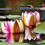 """""""Water Lillys"""" by artstoreroom"""