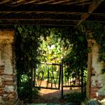 """Arbor with Grape Vines"" by rdwittle"