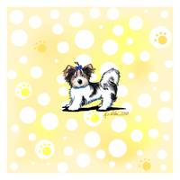 Banana Cream Biewer Terrier