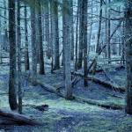 """Forest trees in nature blue green color photograph"" by RF_Photography"