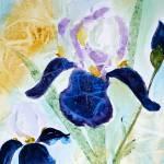 """Iris"" by Yael"