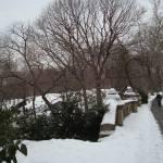 """""""Central Park"""" by RitaFajita"""