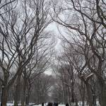 """A stroll through Central Park"" by RitaFajita"
