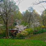 """Spring in Central Park, New York City"" by ShaneWells"