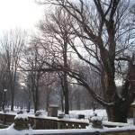 """Winter at Central Park"" by RitaFajita"