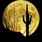 """Rising Full Moon & Cactus"" by FrankZullo"