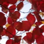 """Crimson Blur"" by PrestonPhotoArtStudio"