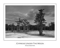 Cypress Under The Moon