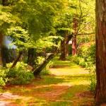 """""""Green Pathway"""" by KatelynnC"""