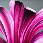 """Lark Pink + Gray"" by StudioEriksdotter"