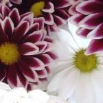 """""""Beautiful Bouquet"""" by BVeldkamp"""