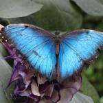 """""""Blue Beauty"""" by BVeldkamp"""