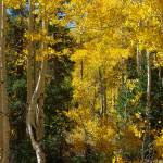 """Fall in the Dixie  National Forest, UT USA"" by vkpelham"