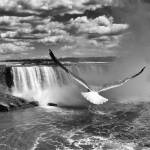 """""""Flight"""" by hess"""