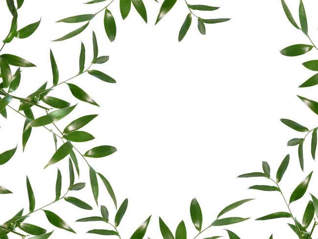 "Green Leaf Border Line Stunning ""Spa Dec..."